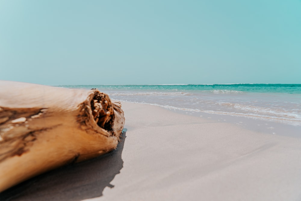 brown wood on white sand beach during daytime