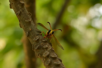 brown and black wasp on brown tree branch during daytime
