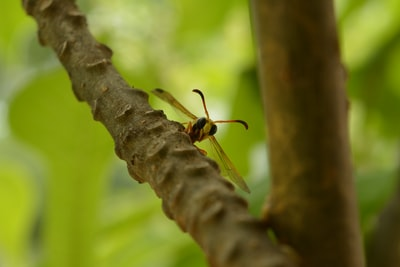 yellow and black bee on brown tree branch during daytime