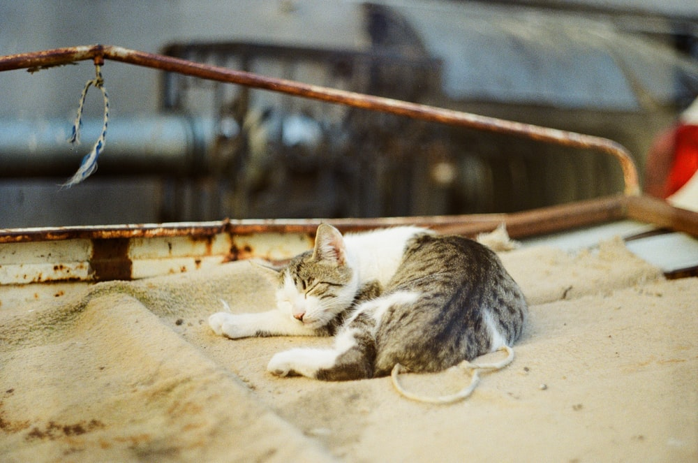 white and grey tabby cat on brown wooden fence