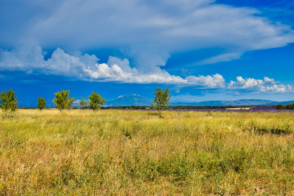 green grass field under blue sky and white clouds during daytime