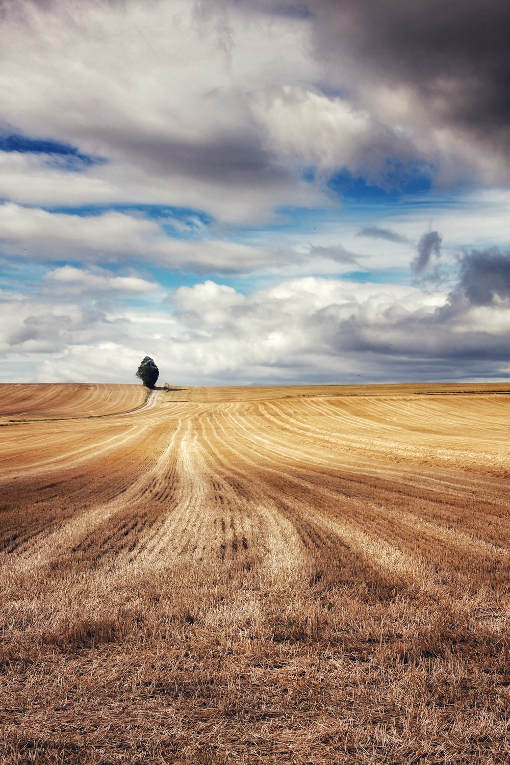 brown field under cloudy sky during daytime