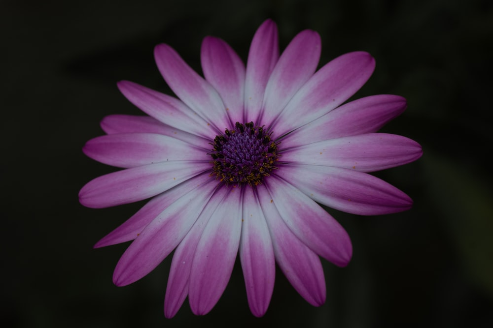 purple flower in tilt shift lens