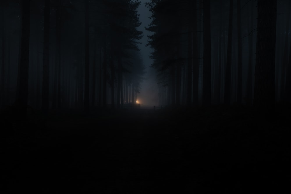silhouette of person standing on forest during night time