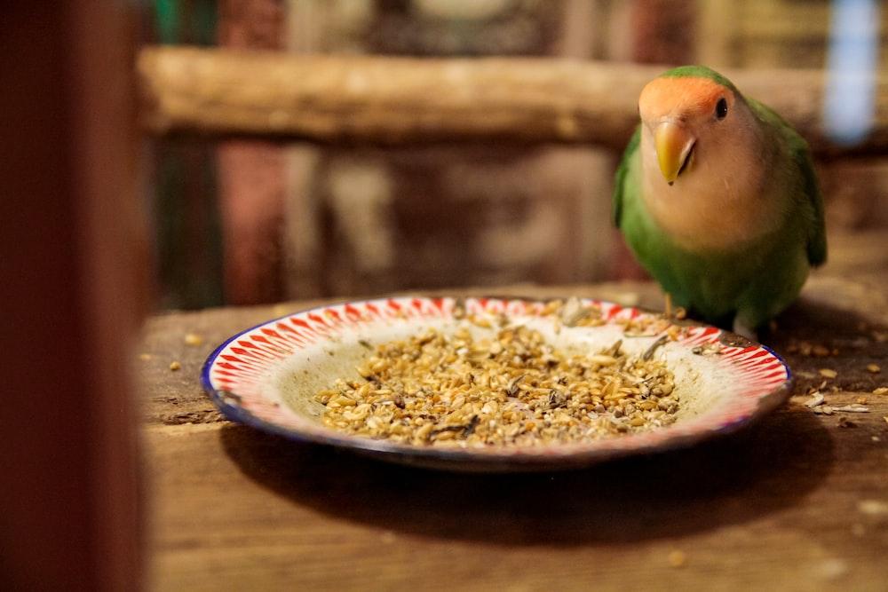 green bird on brown ceramic bowl