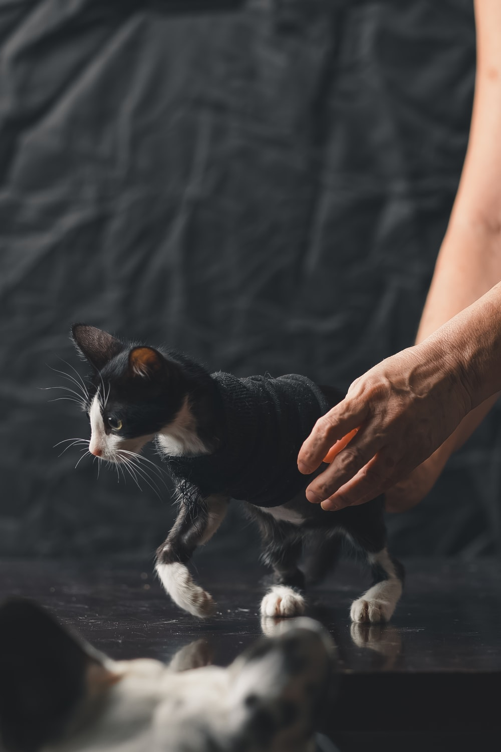 person holding black and white cat