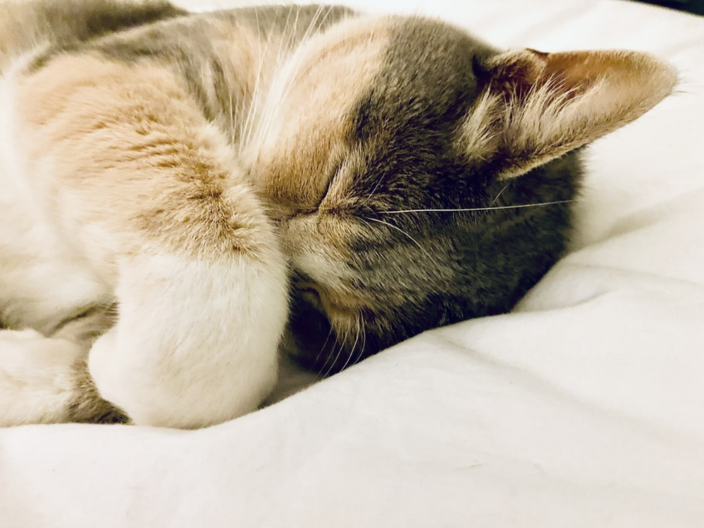 brown tabby cat lying on white textile