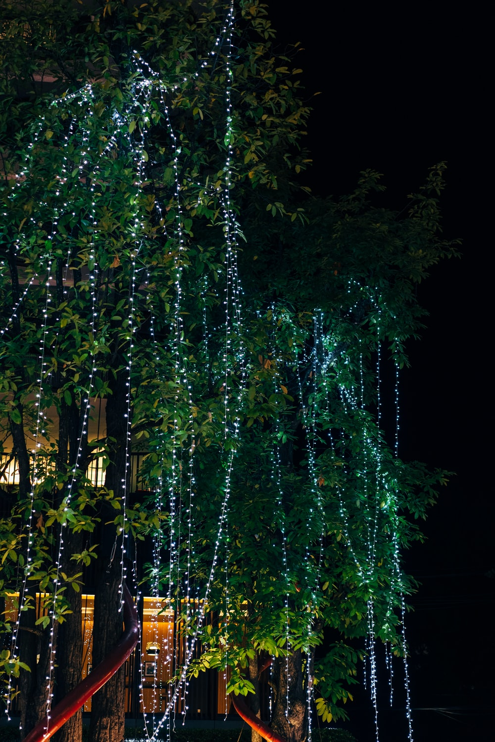 green trees with string lights during night time