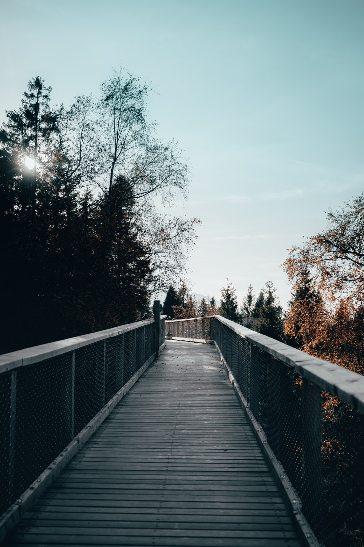 brown wooden bridge in between trees