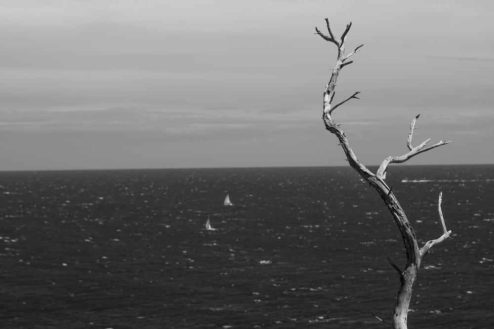 leafless tree on the ocean