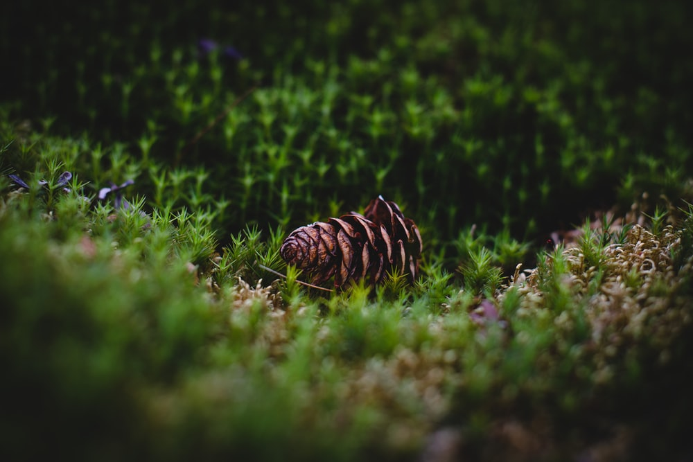 brown and black stripe knit cap on green grass during daytime