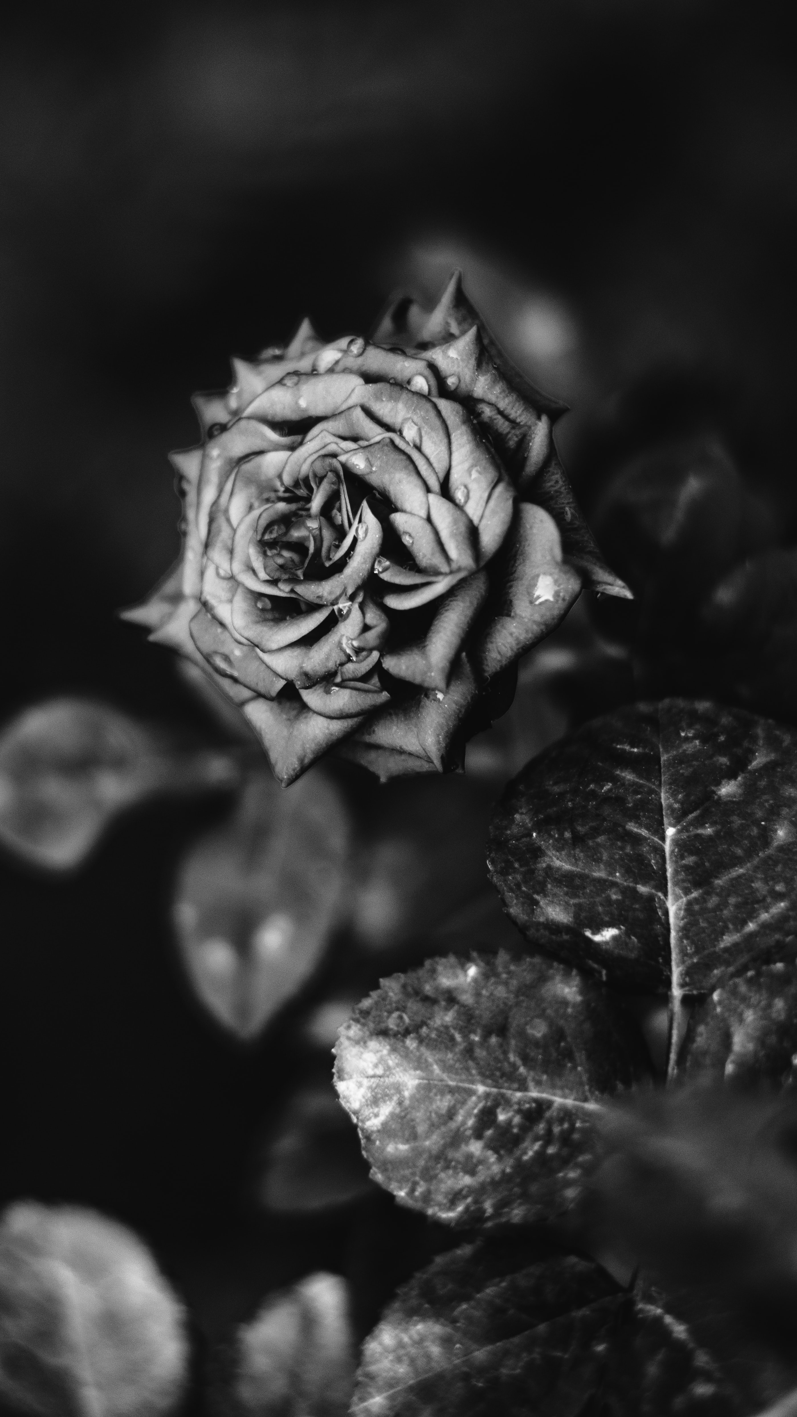 Aesthetic Black And White Flower Wallpaper Flower Black And White Transparent Images 1 514