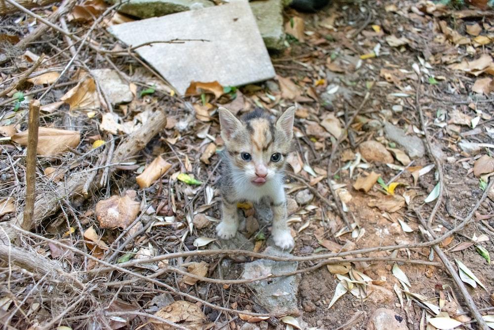 white and brown kitten on gray concrete floor