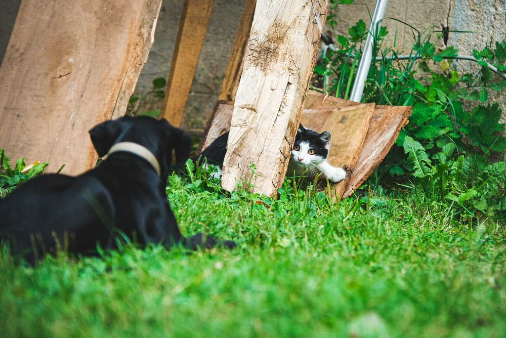 black short coated dog lying on green grass beside brown wooden fence during daytime