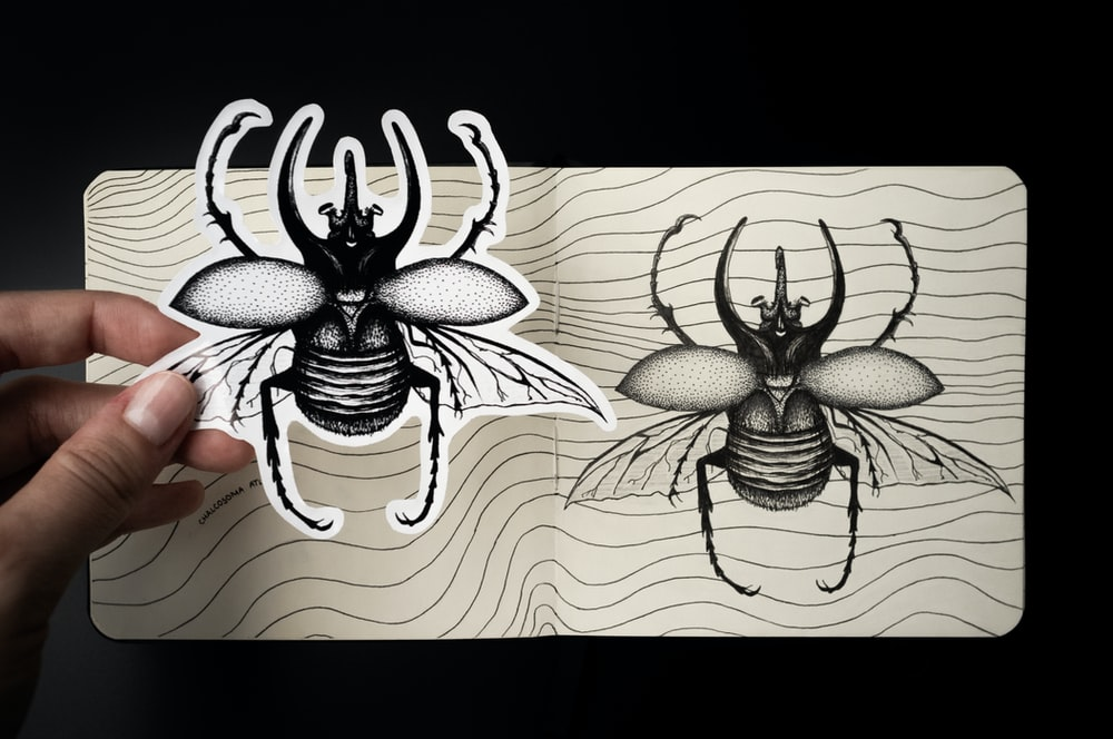 black and white spider illustration