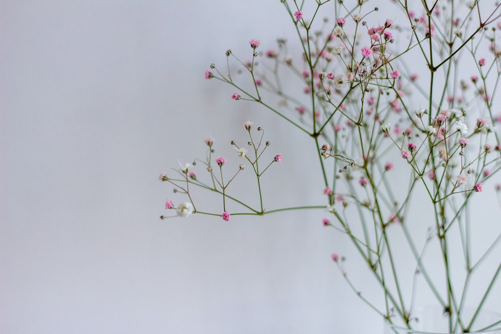 red and white flower buds
