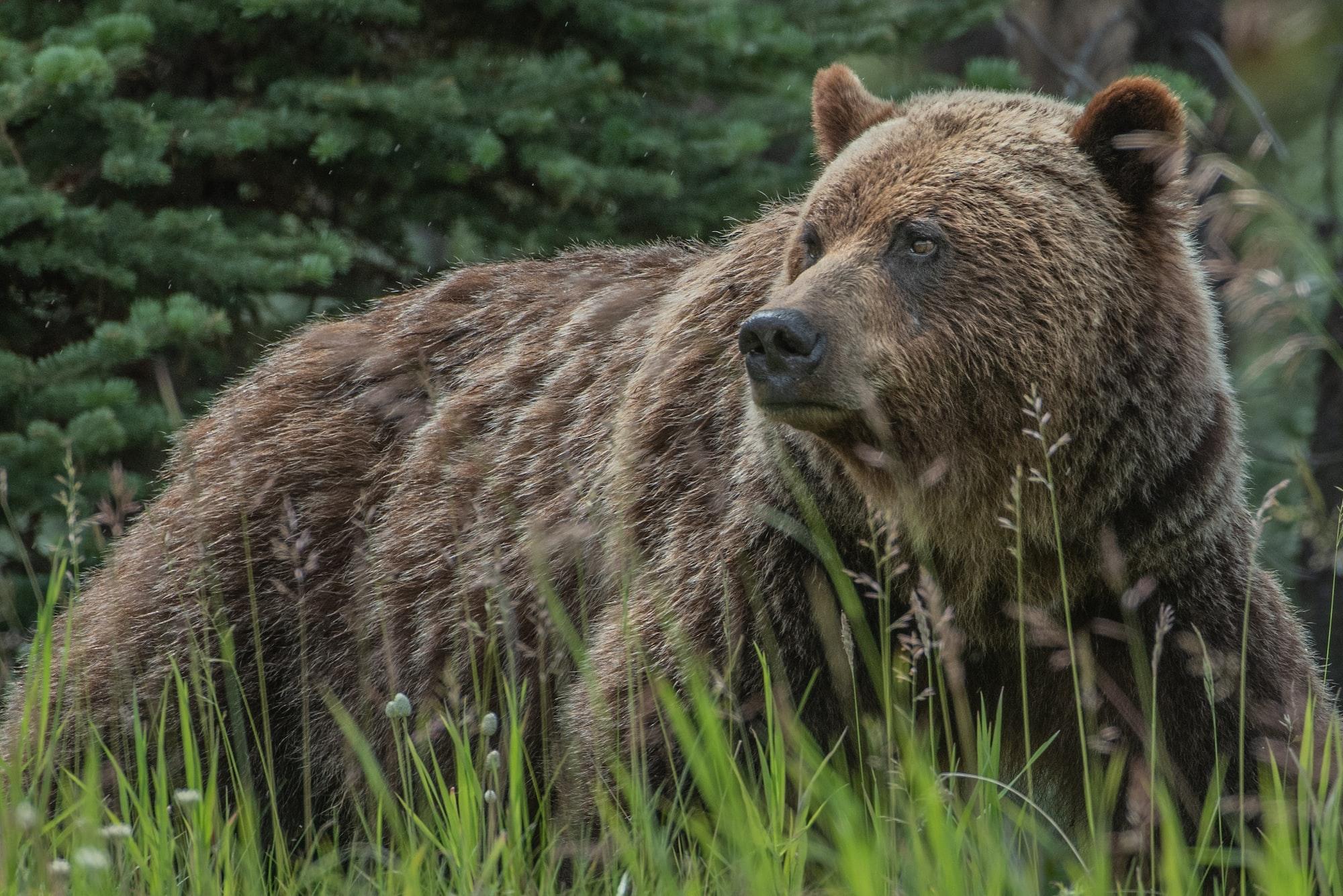 Przegląd wojsk TOP 15 Poland podczas inwazji niedźwiedzi