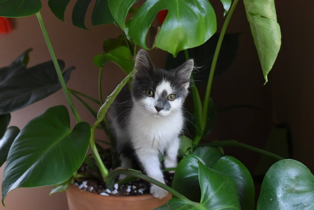 white and black cat on brown plant pot
