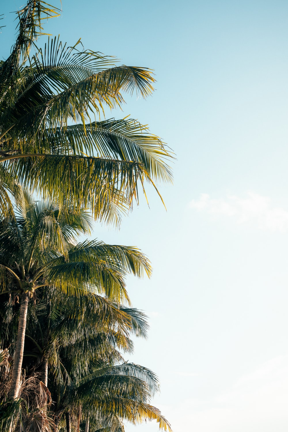 green palm tree under white sky during daytime