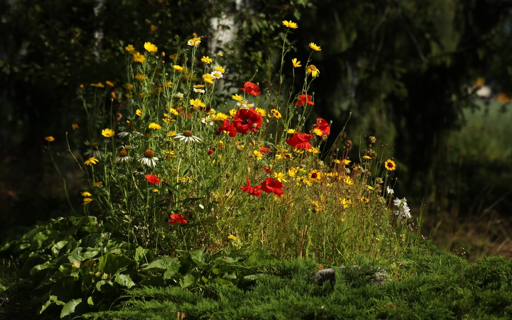 red and yellow flowers on green grass during daytime