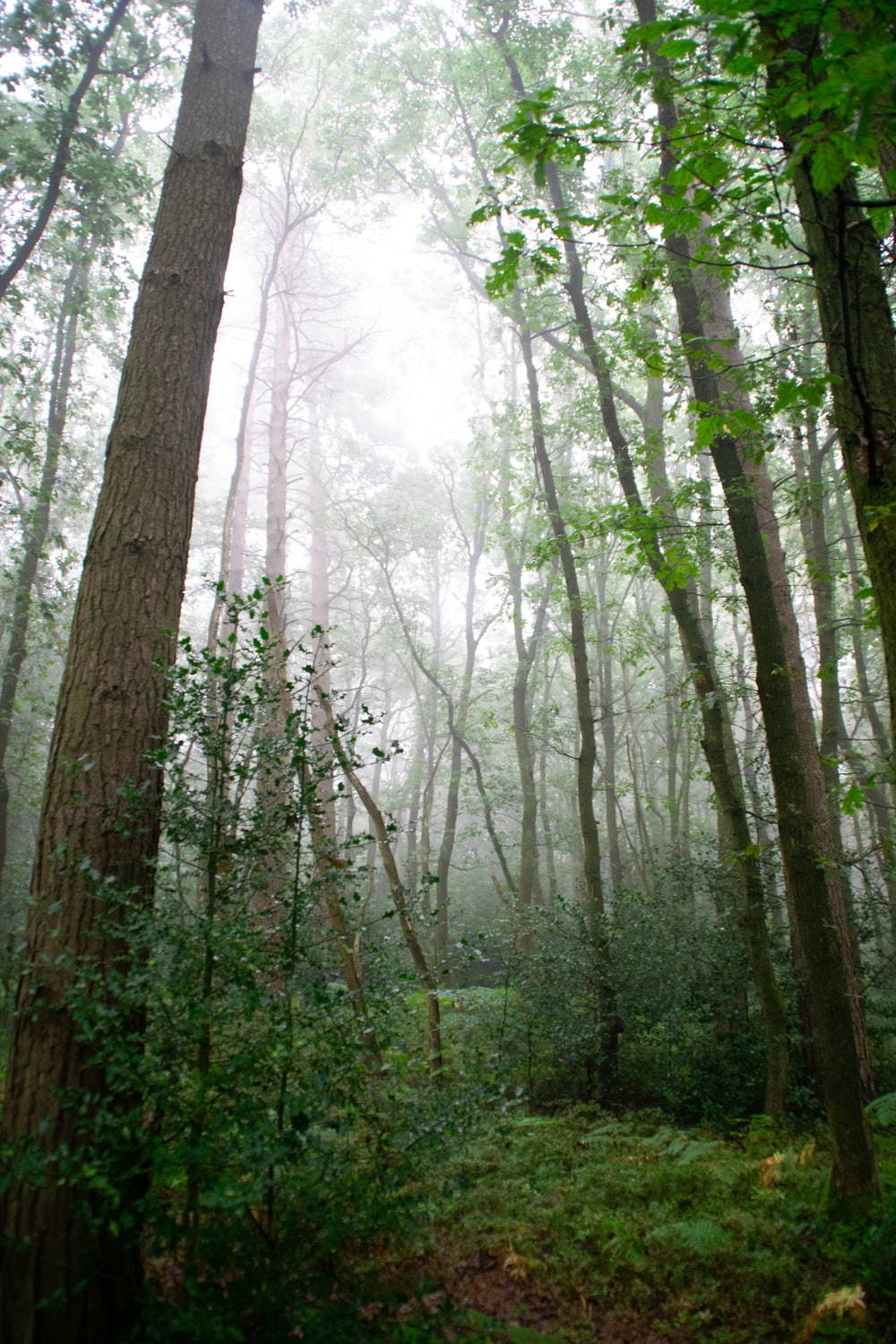 750 Creepy Forest Pictures Download Free Images On Unsplash