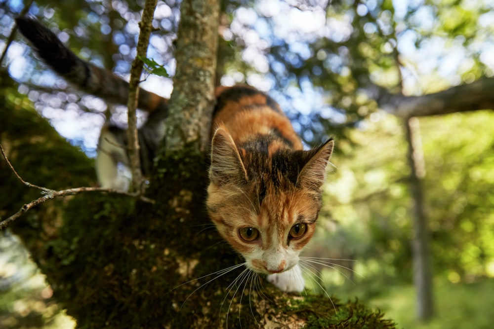 brown and white cat on tree branch