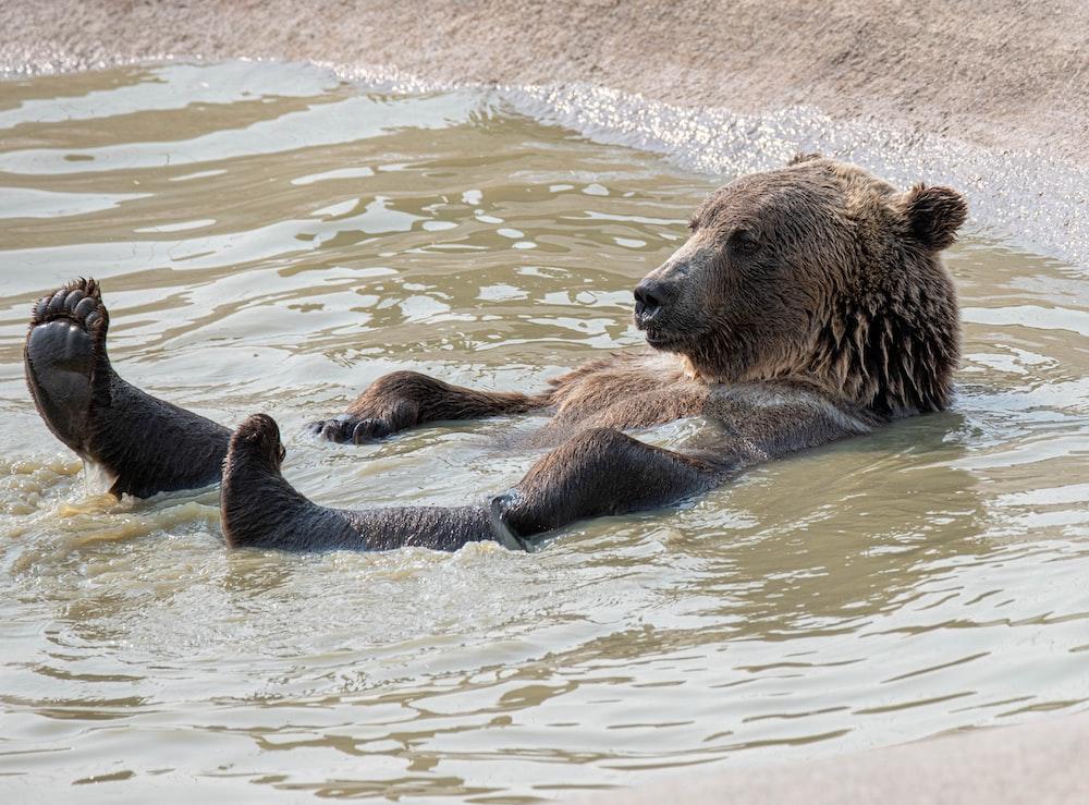 brown bear on water during daytime