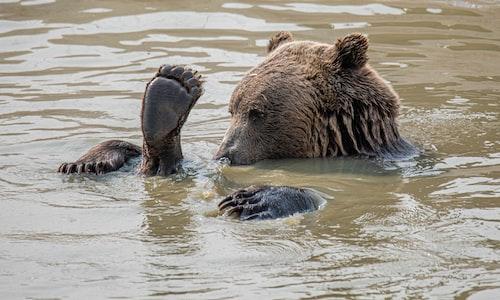 bear pickup line