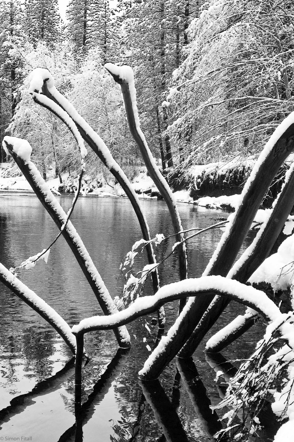 grayscale photo of tree branch near body of water