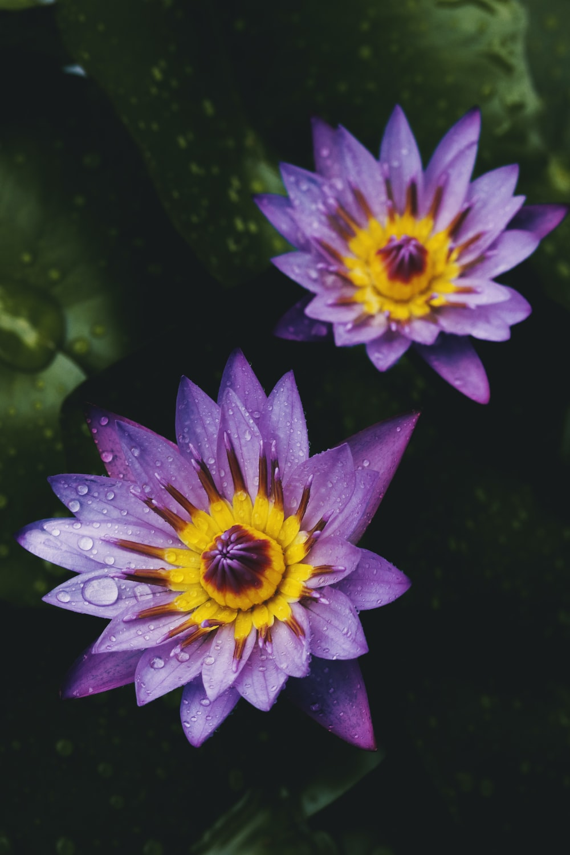 purple flower on green leaves