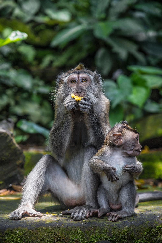 brown monkey sitting on rock during daytime