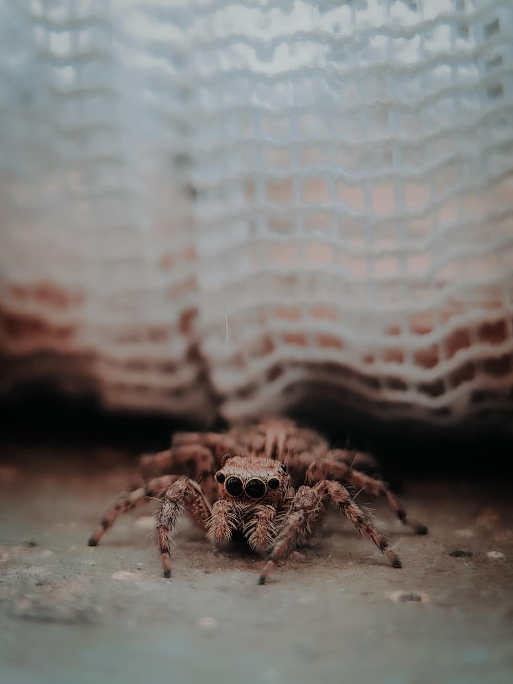 brown spider on white textile