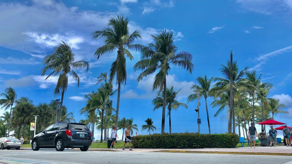black suv parked near palm trees during daytime