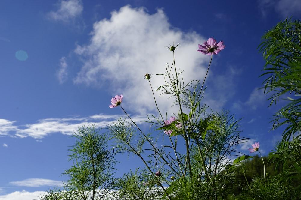 pink flower under blue sky during daytime