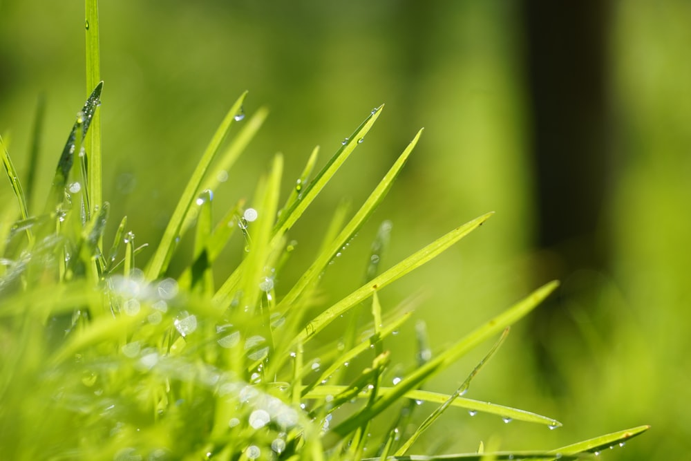 water droplets on green grass