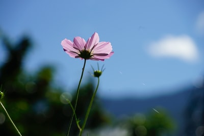 pink flower in tilt shift lens bhutan teams background