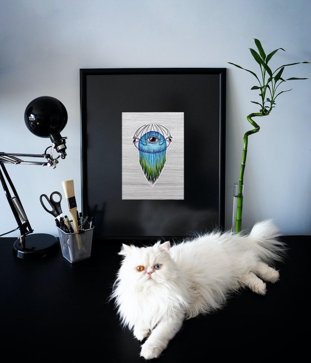white persian cat on black table