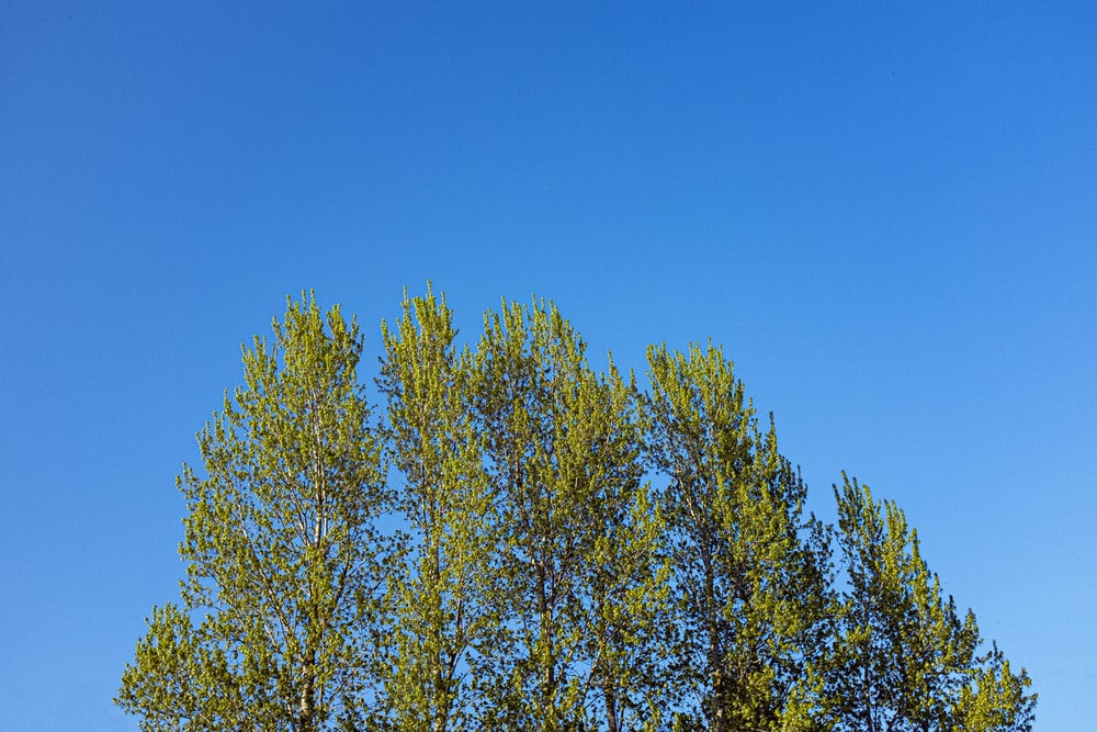 yellow leaf tree under blue sky during daytime