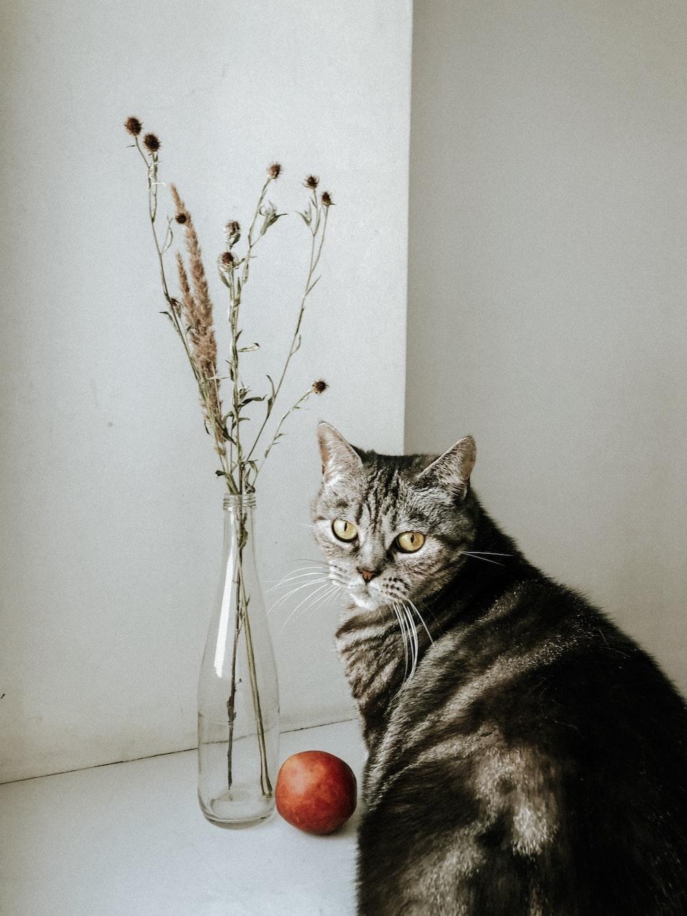silver tabby cat on white floor tiles