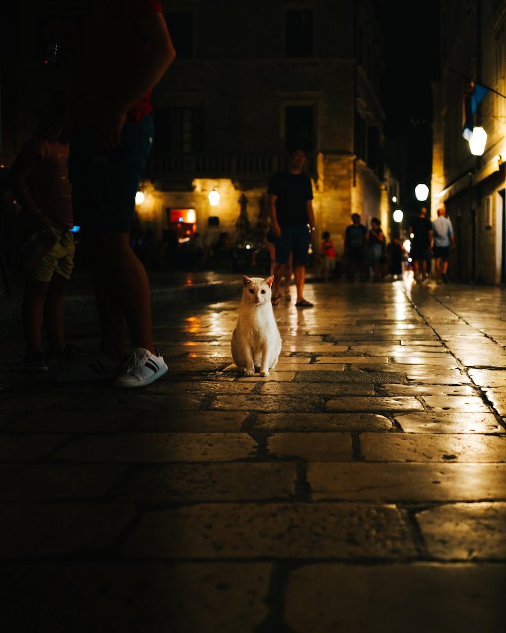 white short coated dog on sidewalk during night time
