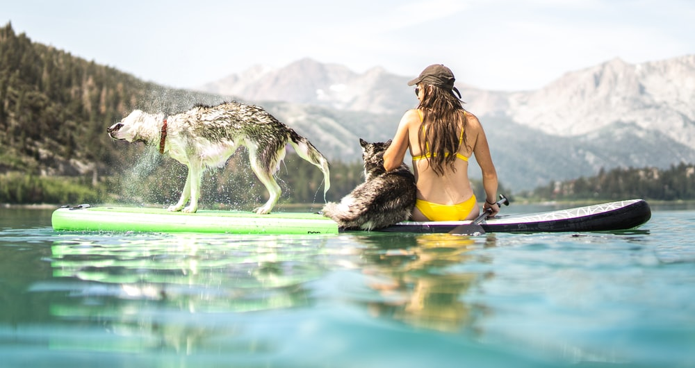 woman in yellow tank top sitting on water with white and black dog during daytime