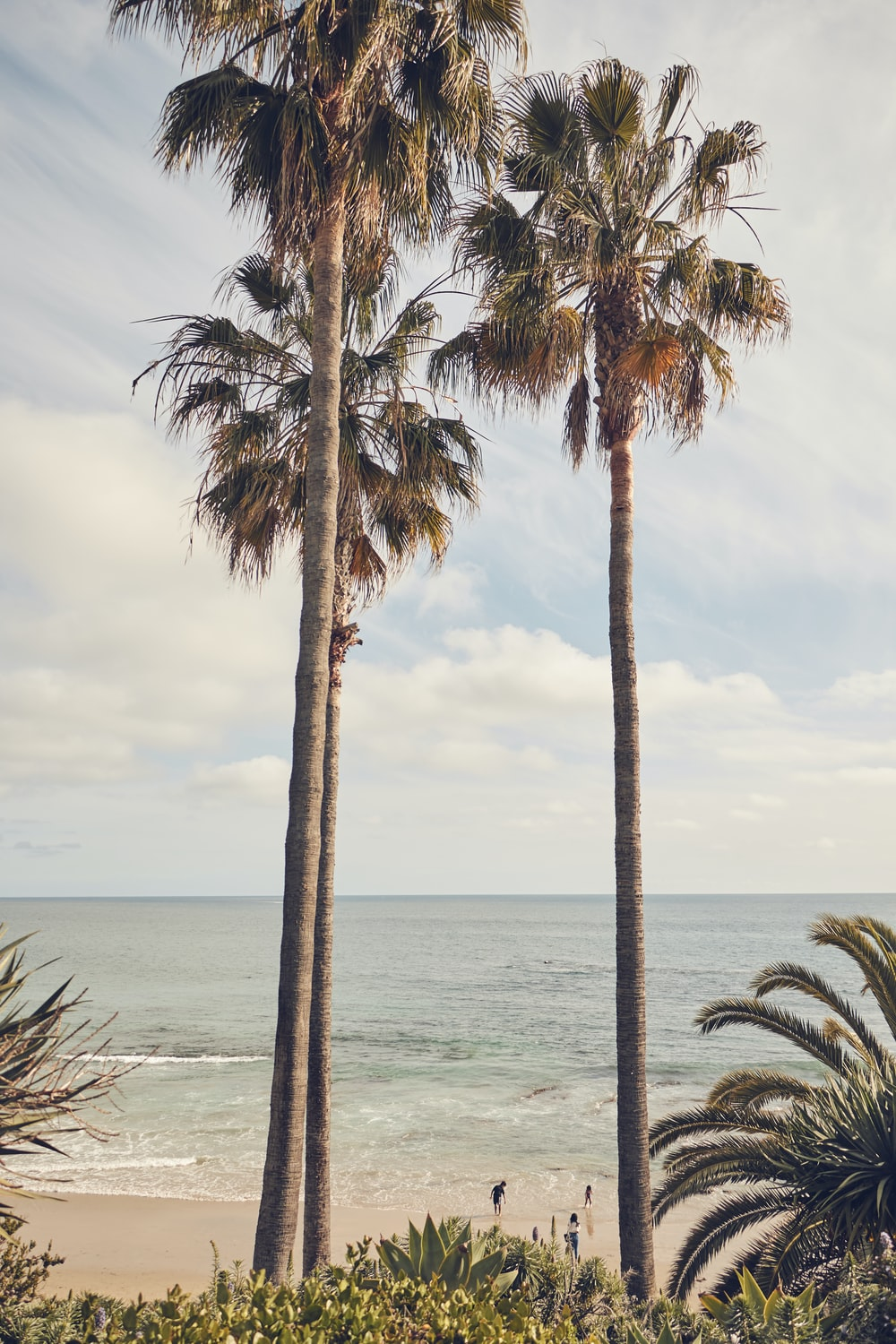 Palm Trees Beach Pictures Download Free Images On Unsplash