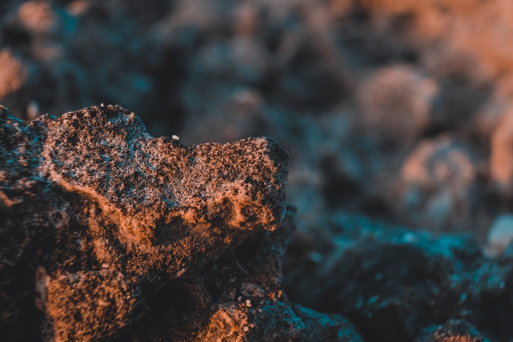 brown and black rock in close up photography