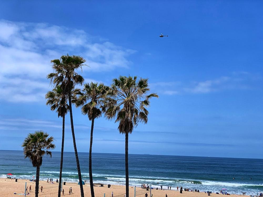 palm tree near beach during daytime