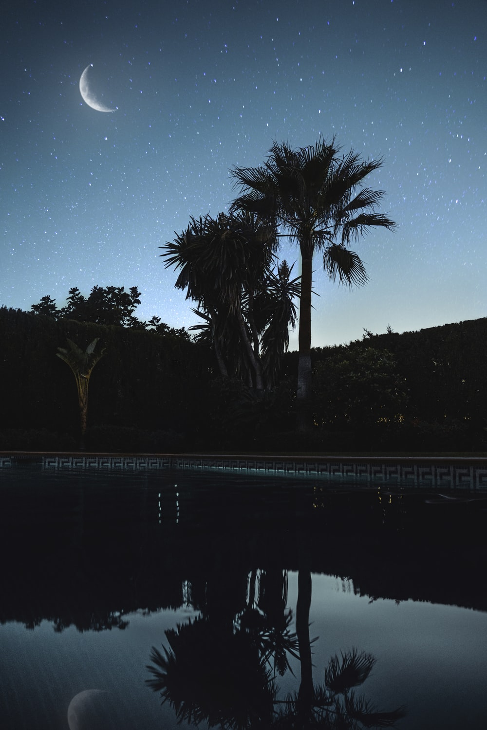 green palm tree near body of water during night time