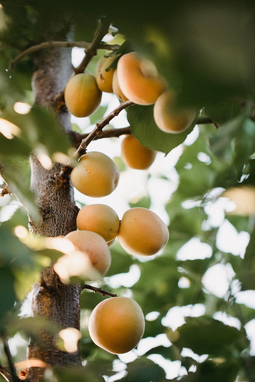 orange fruits on tree during daytime