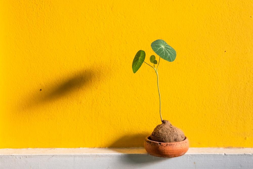 green leaf plant on brown pot