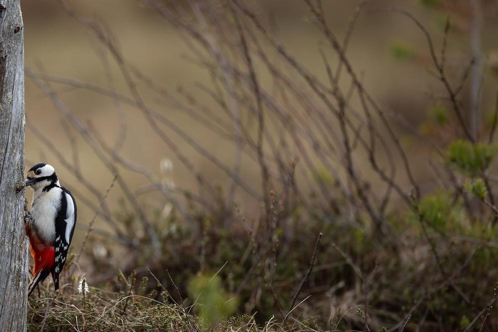 brown grass in tilt shift lens