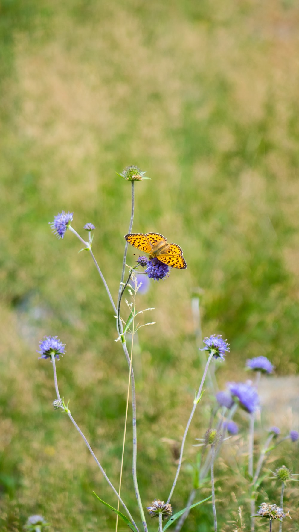 yellow and black butterfly perched on purple flower in close up photography during daytime
