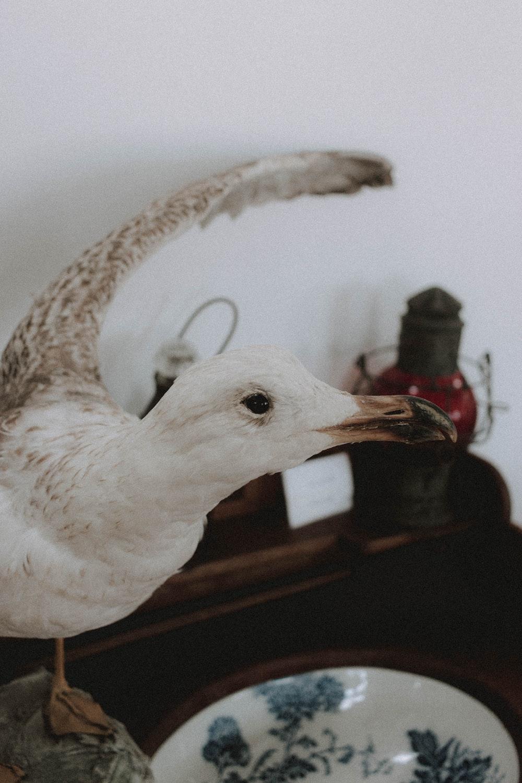 white bird with red beak